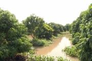 Mưa lớn gây ngập úng một số diện tích cây ăn quả và hoa màu các huyện Khoái Châu và Phù Cừ