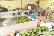 Huyện Khoái Châu phát triển các sản phẩm OCOP