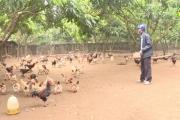 Các trang trại, gia trại chăn nuôi ở huyện Khoái Châu sẵn sàng phục vụ Tết Nguyên đán