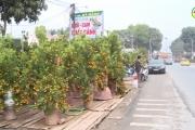 Sôi động thị trường cây cảnh Văn Giang