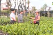 Hợp tác xã giống cây trồng Thành Phát ứng dụng KHCN vào sản xuất kinh doanh