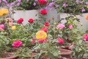 Trồng hoa cho lợi nhuận 200 triệu đồng/héc ta