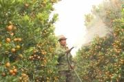 Hưng Yên: Đột phá trong chuyển đổi cây trồng