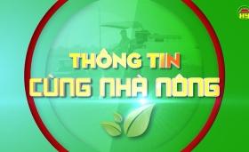 Hưng Yên chủ động các biện pháp phòng chống dịch cúm gia cầm