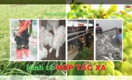 Lãng phí nhân lực, vật lực ở 139 Hợp tác xã dịch vụ nông nghiệp tại Hưng Yên