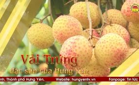 Vải Trứng đặc sản của Hưng Yên