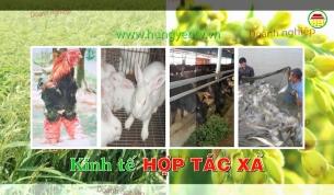 Đa dạng hoa cây cảnh tại các tổ hợp tác huyện Văn Giang
